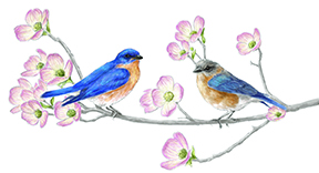 image of bluebird illustration