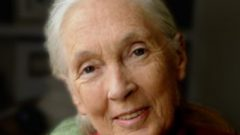 Jane Goodall Tells a Hollins Audience Why She Still Has Hope for Our Planet