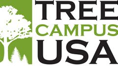 Arbor Day Foundation Honors Hollins with 2016 Tree Campus USA® Recognition