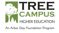 Arbor Day Foundation Honors Hollins with 2020 Tree Campus Higher Education® Recognition